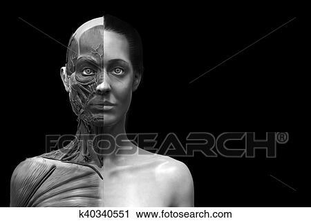 Clipart - mujer, anatomía, plano de fondo k40340551 - Buscar Clip ...