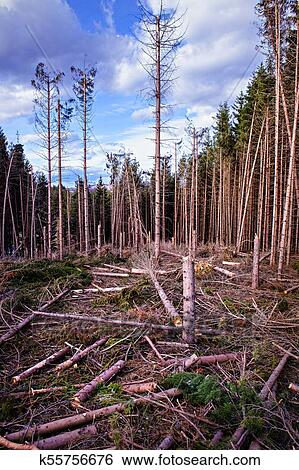 Unplanned Forest Cutting Stock Photograph K55756676 Fotosearch