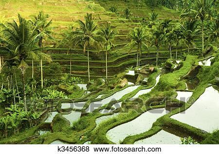 Beelden terras rijstvelden k3456368 zoek stock foto 39 s beelden print fotografie n en foto - Beeldterras ...