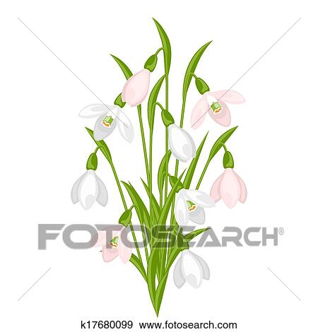 Clip Art Strauß Blumen Schneeglöckchen Weiß Hintergrund