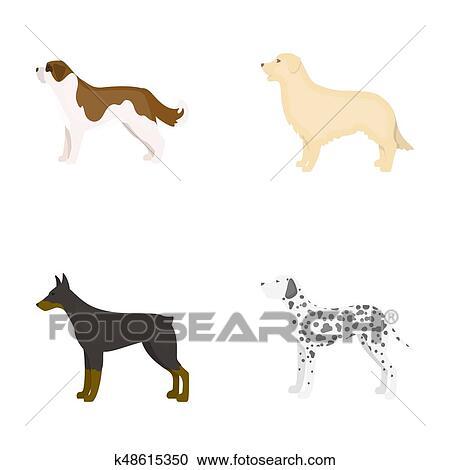 stock illustrations of st bernard retriever doberman labrador