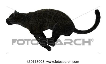 Grand Chat Panthere Noire Dessin K30118003 Fotosearch