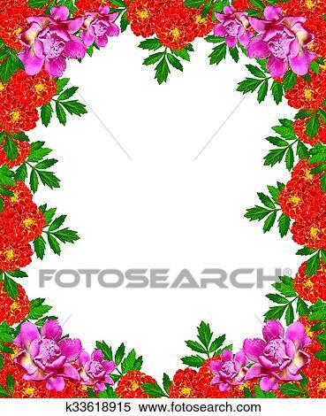Banque D Illustrations Souci Fleurs Isole Blanc Fond K33618915