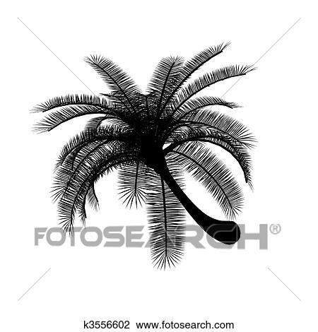 Noir Blanc Palmier Dessin