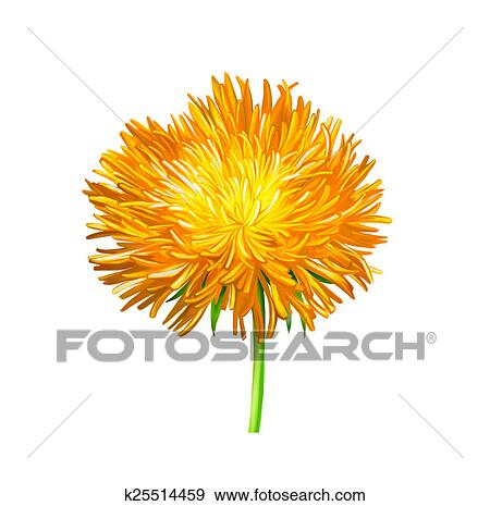 Stock photograph of yellow thistle flower aster flower stock photograph yellow thistle flower aster flower illustration isolated on white fotosearch mightylinksfo