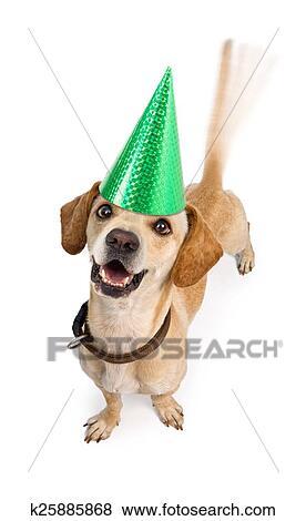 Immagini Buon Compleanno Cane Agitando Coda K25885868 Cerca