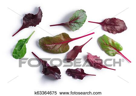 Swiss Chard Silverbeet Mangold Leaves Paths Top Stock Photography K63364675 Fotosearch