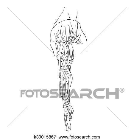 側面 筋肉 の 腕 イラスト K39015867 Fotosearch