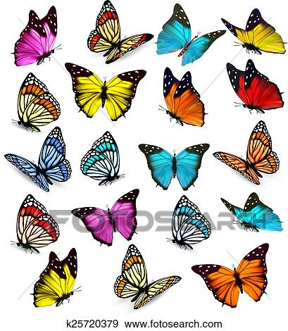 Clip Art Of Big Collection Of Colorful Butterflies Vector K25720379
