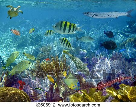 Caribbean Reef Tropical Fishes Underwater Sea View