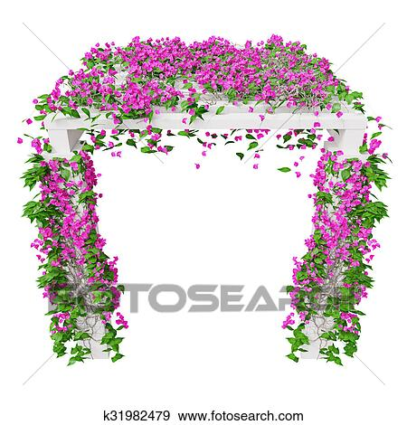 Stock illustration of pink climbing flowers bougainvillea k31982479 pink climbing flowers bougainvillea 3d graphic isolated object on white background mightylinksfo