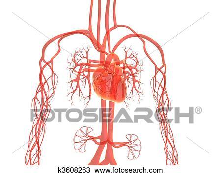 Dibujo - sistema vascular k3608263 - Buscar Clip Art, Ilustraciones ...