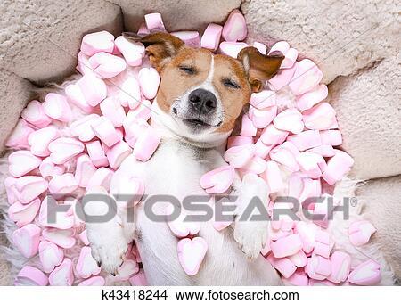 deve amare cani datazione