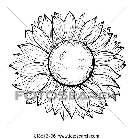 Clip Art Of Beautiful Black And White Sunflower Isolated On White