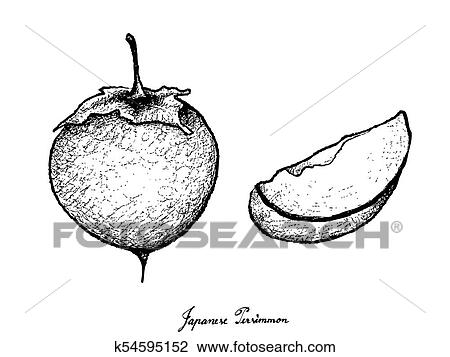 hand drawn of kaki or japanese persimmon on white background clipart k54595152 fotosearch fotosearch