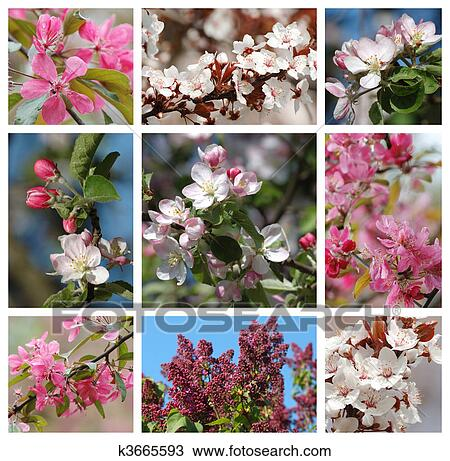 Stock photo of spring season nature collage k3665593 search spring season nature collage with sakuraapricotlilac and apple tree flowers mightylinksfo