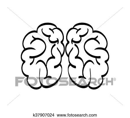 Clipart - humano, órgano, design., cerebro, icon., vector, gráfico ...