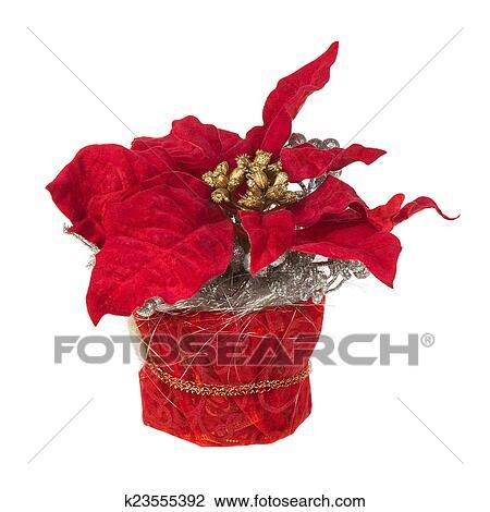 Stella Di Natale Pianta.Composizione Da Stella Di Natale Pianta Con Rami Coni Nastri Archivio Immagini