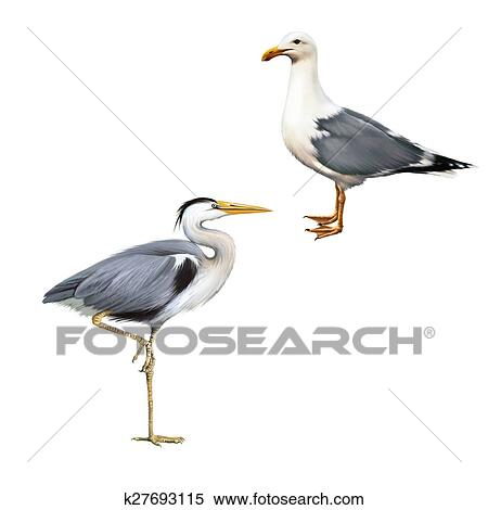 Stock Illustration Of Grey Heron Ardea Cinerea White Bird Seagull