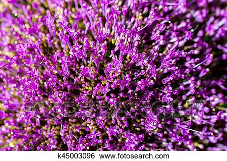 Abstract Lilac Flowers Bouquet Top View Selective Focus Beautiful Natural Floral Background Always Fashionable Modern Color For Background