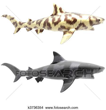 Dessins Requin Tigre Dans Grand Chat Fourrure Sur A Blanc