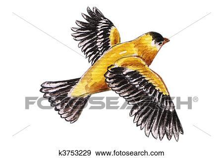 Oiseau volant dans aquarelle banque d 39 illustrations k3753229 fotosearch - Jeux d oiseau qui vole ...