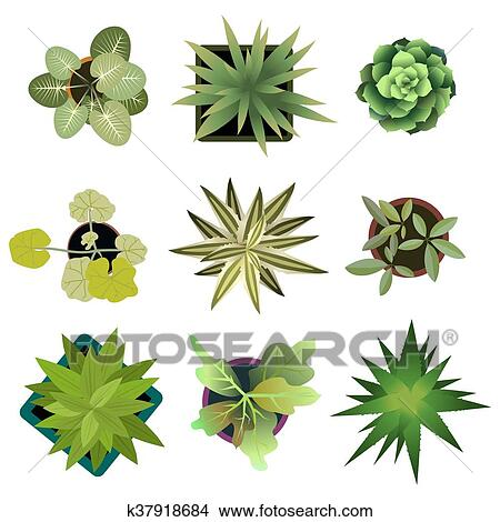 Clipart Of Top View Plants Easy Copy Paste In Your Landscape Design