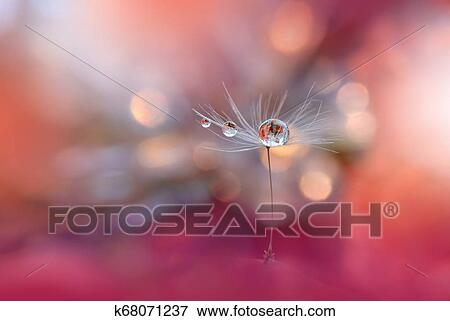Beautiful Spring Nature Background And Dandelion Flower