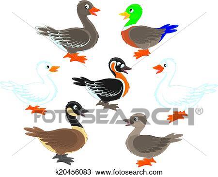Clipart Patos Y Gansos K20456083 Buscar Clip Art