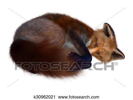 Clipart Volpe Rossa K30962021 Cerca Clipart Illustrazioni