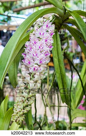 Stock Photo Of Pink Orchid Flower Blooming Tropical Plants
