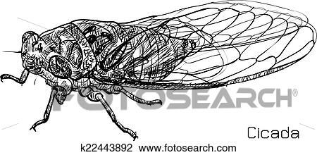 Clipart dessin de cigale k22443892 recherchez des - Dessin de cigale ...