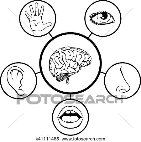 clipart of brain and five senses k41111465 search clip art rh fotosearch com 5 senses clipart black and white