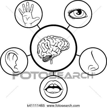 clipart of brain and five senses k41111465 search clip art rh fotosearch com my 5 senses clipart my 5 senses clipart
