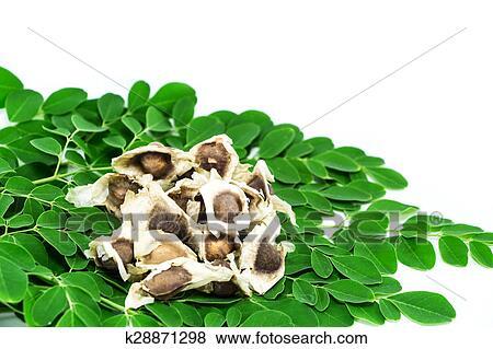 Lục Bát Hoa ĐV - Page 38 Bitter-cucumber-chinese-moringa-stock-photo__k28871298