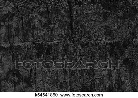 Monochrome Palm Tree Bark Texture Wooden Background For Web Site And Mobile Devices Stock Image K54541860 Fotosearch