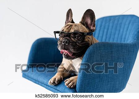 Archivio Fotografico Bulldog Francese In Occhiali Su Sedia