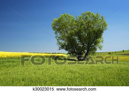 Colección De Imágen árbol En El Forma De Corazón K30023015