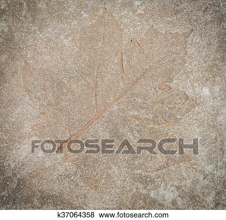 Hoja Impresión En Piedra Colección De Foto