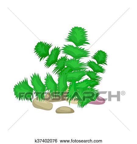 Clip Art Alga Isolato Colorito Coralli E Alghe Vettore