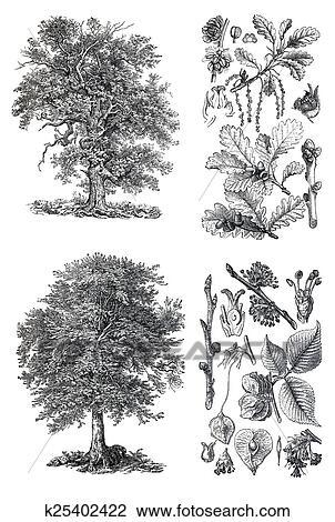 Retro silhouettes of a forest oak Clip Art