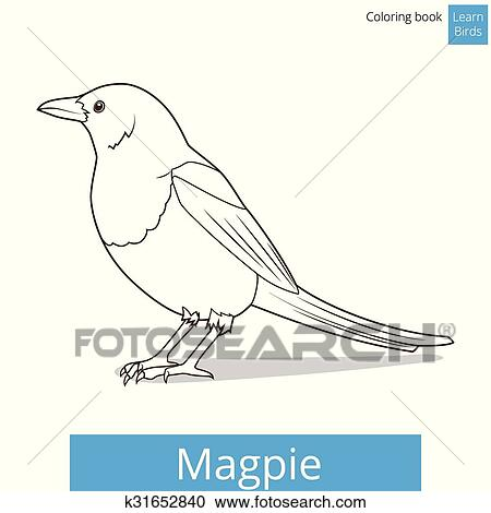 Magpie learn birds coloring book vector Clipart