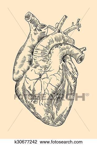 Dibujo Del Corazon Humano Wwwincreiblefotoscom
