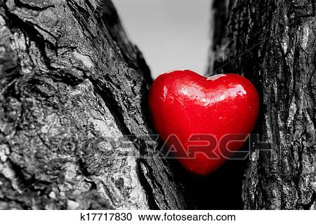 Red Heart In A Tree Trunk Romantic Symbol Of Love Stock