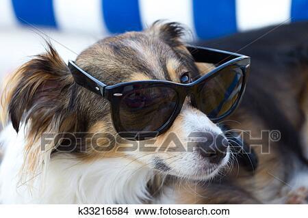 b96debe1f50d6 Banque de Photo - chien