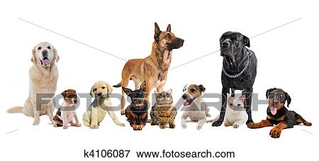 Picture Of Group Of Puppies And Cats K4106087 Search Stock