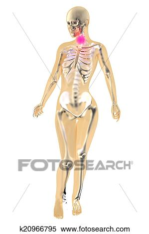 Anatomie Gorge banque d'illustrations - femme, anatomie, -, gorge, douleur