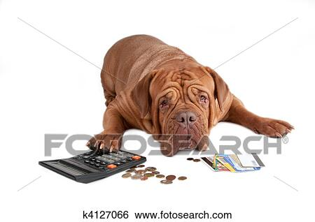 Stock Image Dog With Calculator Cents And Credit Cards Fotosearch Search Stock