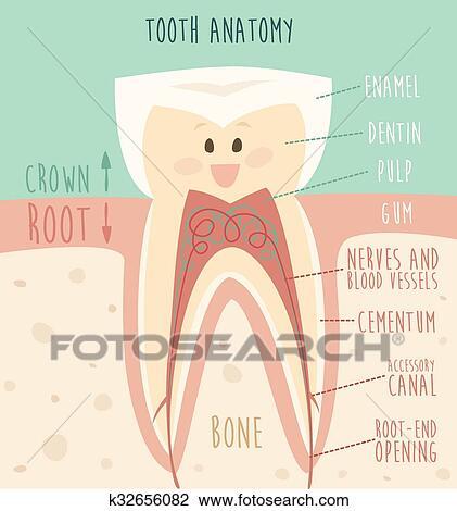 Clipart - diente, anatomía, divertido, diente, concepto, de, dientes ...
