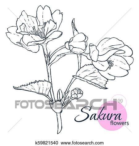 Hand Drawn Japanese Blossom Sakura Flowers Line Art Style Illustration Coloring Book For Adult And Children Clipart K59821540 Fotosearch